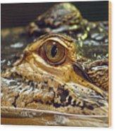 Alligator Eye Close Up-2 Wood Print