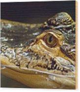 Alligator Eye Close Up Wood Print