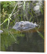 Alligator Hunting Wood Print