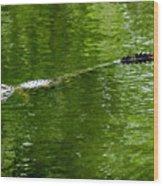 Alligator In Wait Wood Print