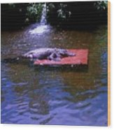 Alligator Resting Wood Print