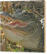 Alligator Showing Its Teeth Wood Print