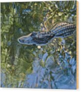 Alligator Stalking Wood Print
