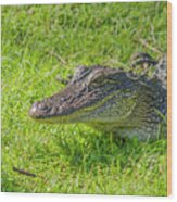 Alligator Up Close  Wood Print by Allen Sheffield
