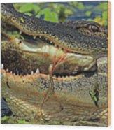 Alligator With Tilapia Wood Print
