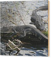 Alligators In An Everglades Swamp Wood Print