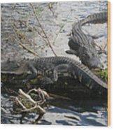 Alligators In An Everglades Swamp Wood Print
