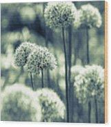Allium 3 Wood Print