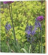 Allium And Camassia Wood Print