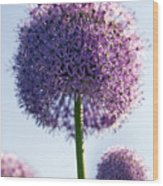 Allium Flower Wood Print