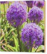 Allium Flowers Wood Print