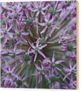 Allium Macro Wood Print