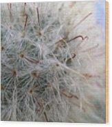 Allium Sativum Wood Print