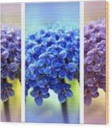 Allium Triptych Wood Print