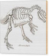 Allosaurus Skeleton Wood Print