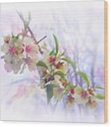Almond Blossoms Wood Print