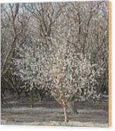 Almond Orchard 1 Wood Print