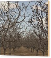 Almond Orchard Wood Print by Denice Breaux