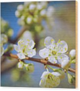 Almond Tree Branch Wood Print