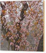 Almond Tree Flowers 05 Wood Print