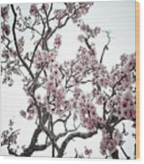 Almond Tree In Flower Wood Print