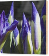 Almost Blooming - The Iris Wood Print