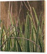 Aloe 3 Wood Print