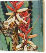 Aloe Bloom Desert Garden Wood Print
