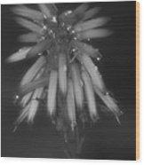 Aloe Bloosom Wood Print