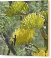 Aloe Blossoms with a Hummingbird Wood Print