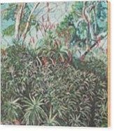 Aloe Garden Vumba Wood Print