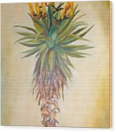 Aloe In The Sunlight Wood Print