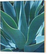 Aloe 2 Wood Print