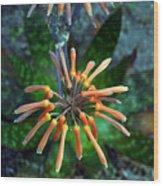 Aloe Vera Wood Print