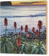 Aloe Vera In Flower At The Seaside Wood Print