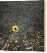 Alone - 365-328 Wood Print