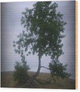 Alone On The Hill Wood Print by Trina Prenzi