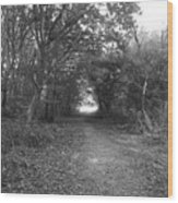 Along A Woodland Path Wood Print