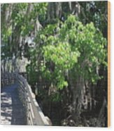 Along Florida Boardwalk Wood Print