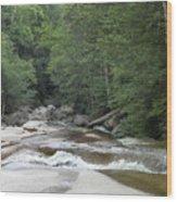 Along The Hiking Trail Wood Print