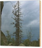 Along The Needles Highway Wood Print