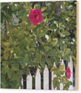 Along The Picket Fence Wood Print