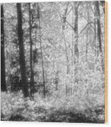 Along The Top Bw  Wood Print