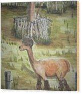 Alpaca Glory Wood Print