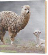 Alpacas Mum And Baby Wood Print