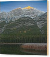 Alpenglow Over Frosty Reeds Wood Print