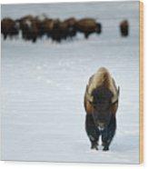 Alpha Male Bison Wood Print