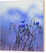 Montana Blue Bells Wood Print