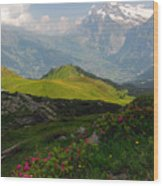 Alpine Roses In Foreground Wood Print