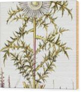 Alpine Thistle Wood Print
